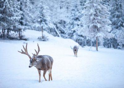 web-IMG_7841 - mule deer - Jake Paleczny