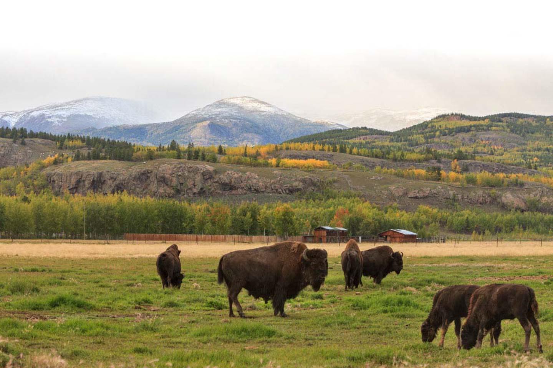 Our Wildlife Yukon Wildlife Preserve