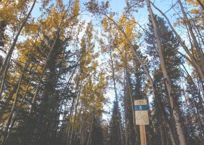 trail wandering - ywp - Lindsay Caskenette-1280px