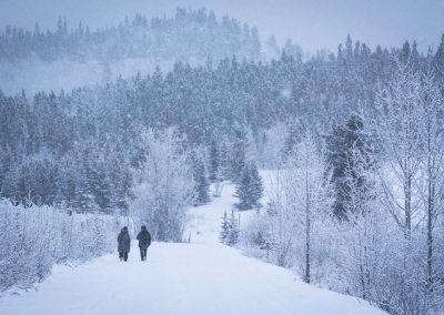 winter trees walking Lindsay Caskenette-1280px