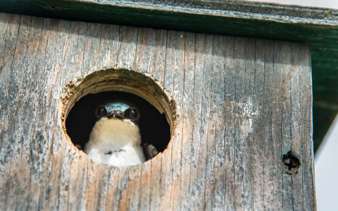 Nest Box Mysteries