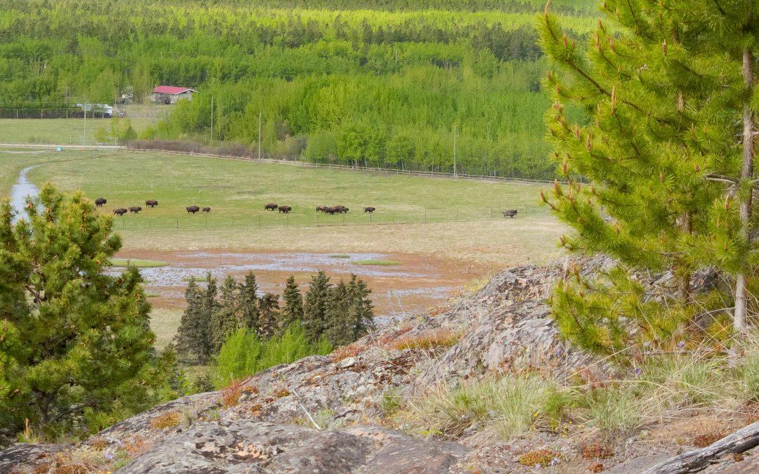 Grassland Habitats – Yukon Wildlife Preserve