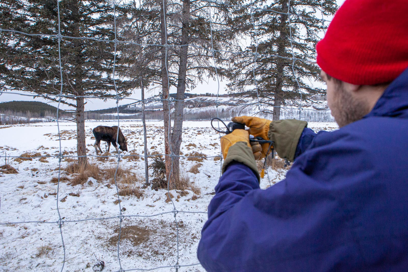 Picture of Joshua Robertson at the Yukon Wildlife Preserve.
