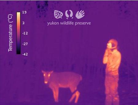 Thermal image of Jake and Caribou at -35c