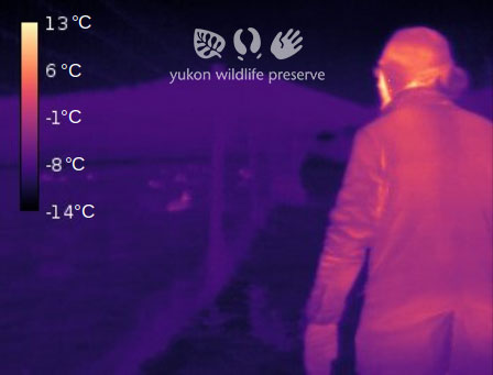 Thermal image of Jake walking at the YWP.