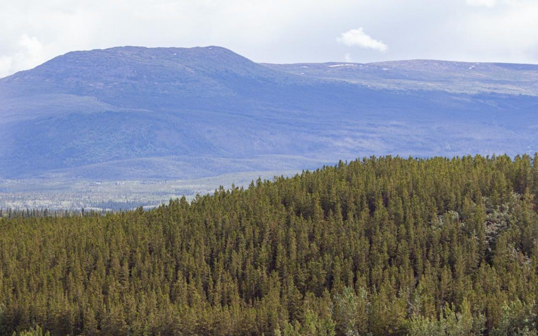The Boreal Forest – A Life Source