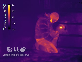 Thermal image of Jake wearing a coat beside a Muskox at 34c below 0c.