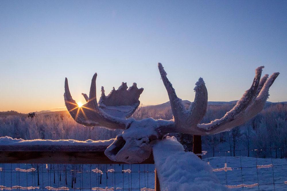 Photo of moose skull at -40c