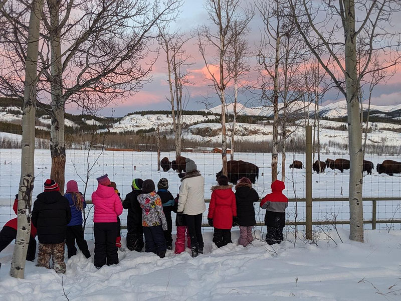 Photo of kids outside watching bison in the winter.