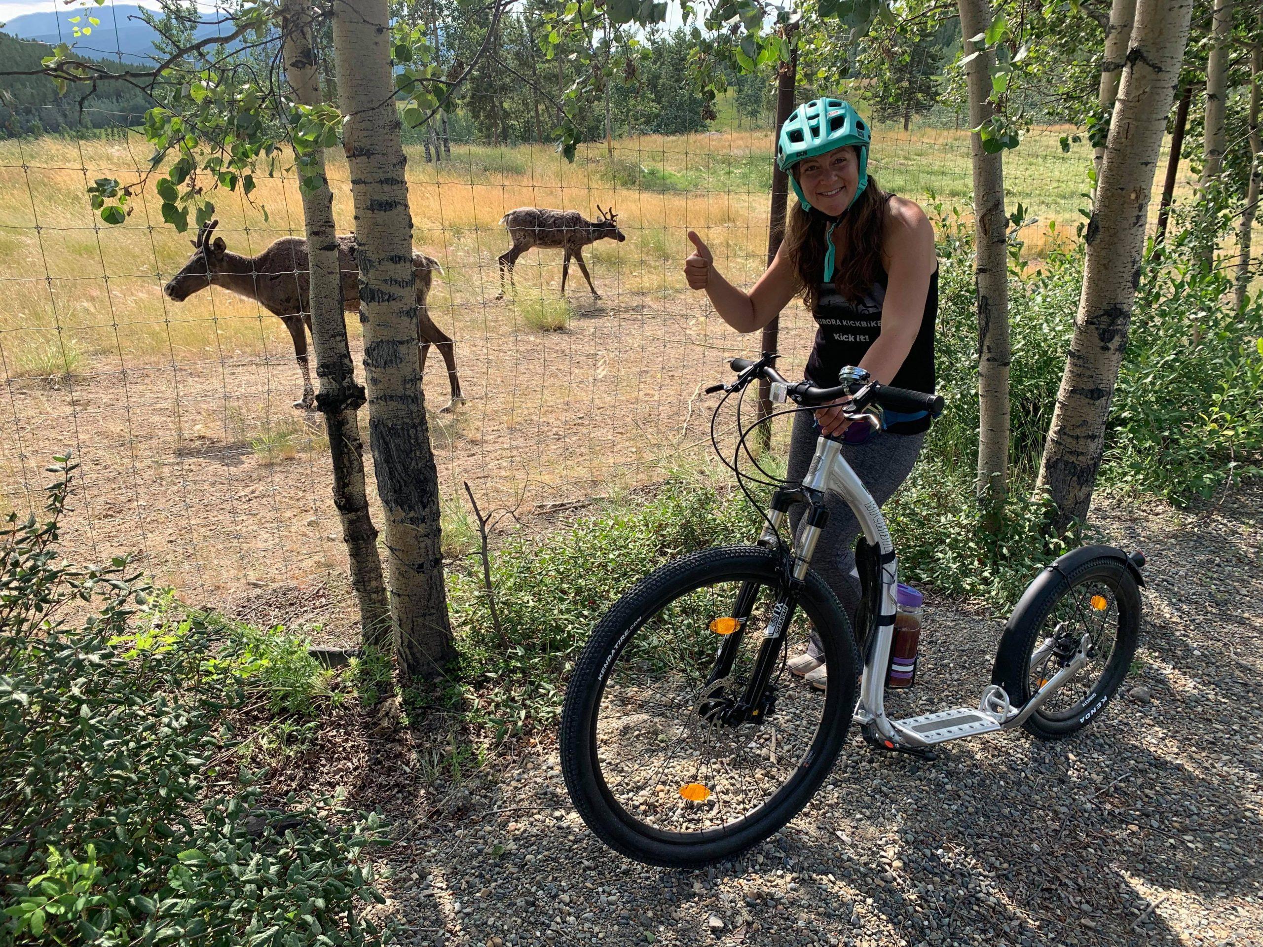 Run Wild Event fundraiser wildlife rehabilitation
