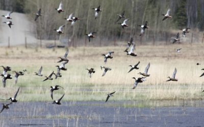 Vernal Species Migration