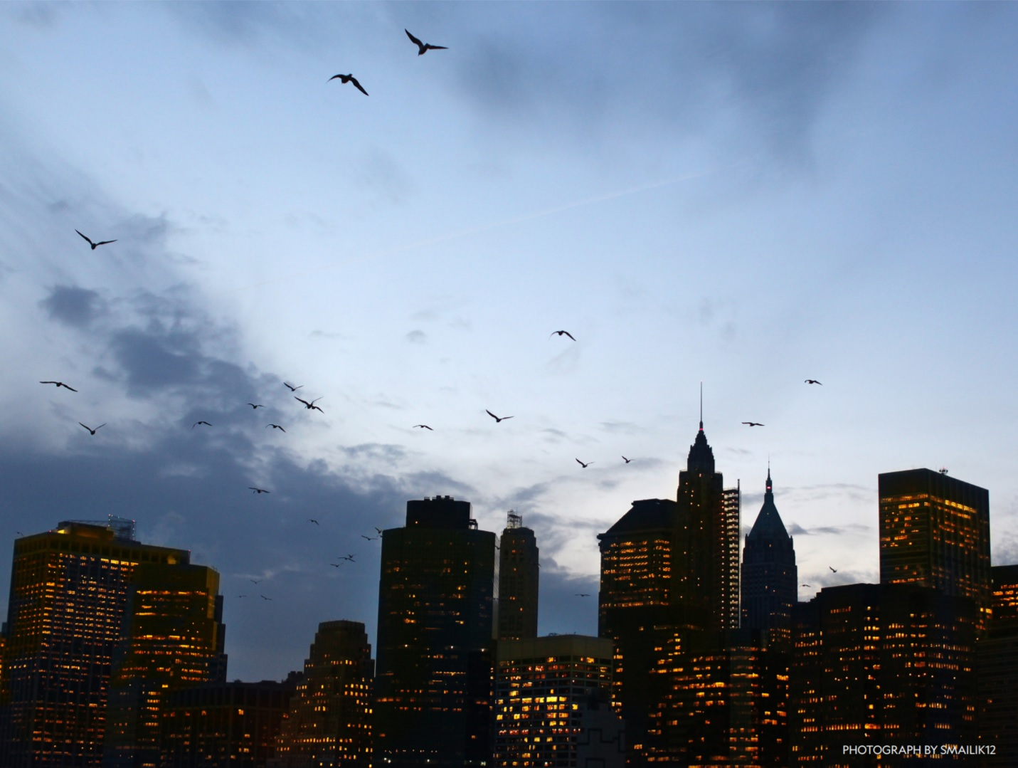 Bird migration and cities